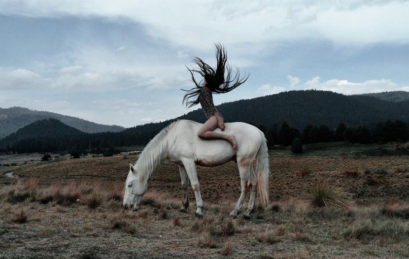 paard