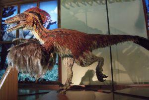 """Afbeelding 3: Model van een Deinonychus uit de tentoonstelling """"Feathered Dinosaurs and the Origin of Flight"""""""